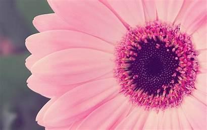 Laptop Girly Wallpapers Pink Background Wallpapersafari
