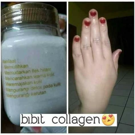 Bibit Collagen Original Cv bibit collagen original pemutih kulit cv mecca anugrah