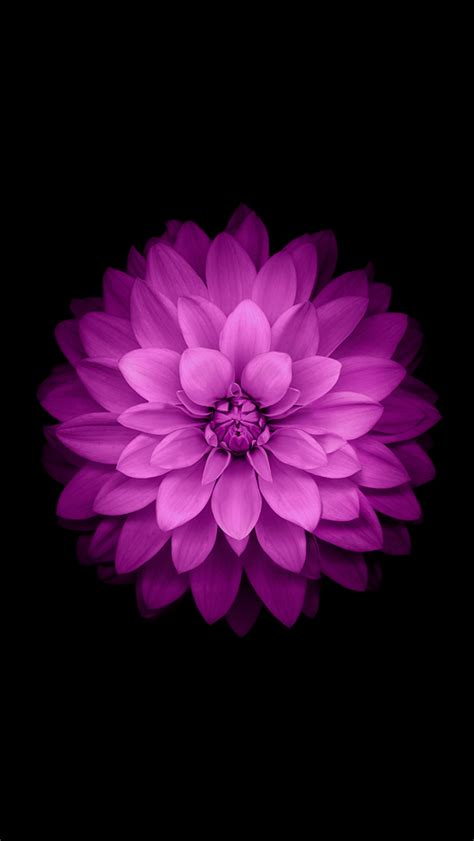 Iphone 6 Flower Wallpaper Hd by 25 Hd Retina Wallpaper Collection Of Iphone 6 Plus Hdpixels