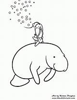 Manatee Coloring Drawing Pages Manatees Swimming Line Clipart Printable Popular Getcolorings Print Adult Getdrawings Library Coloringhome sketch template