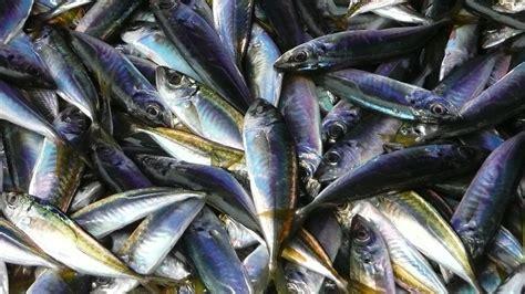 comment cuisiner du poisson 4 secrets dévoilés par notre poissonnier