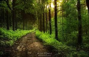 Wild Forest by WojciechDziadosz on DeviantArt