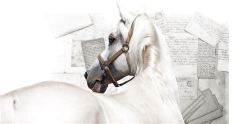 rules  horse buyers  horse owners resource