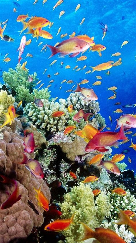 aquarium poisson de fond aquarium fond d 201 cran anim 233 avec des poissons applications android sur play