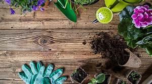 Le Bon Coin 62 Jardinage : les bienfaits insoup onn s du jardinage sur la sant bio ~ Melissatoandfro.com Idées de Décoration