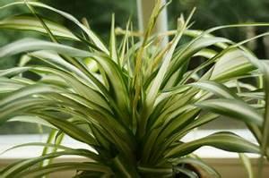 Zimmerpflanzen Pflege Tipps : beliebte gr ne und bl hende topfpflanzen sorten und ~ Lizthompson.info Haus und Dekorationen