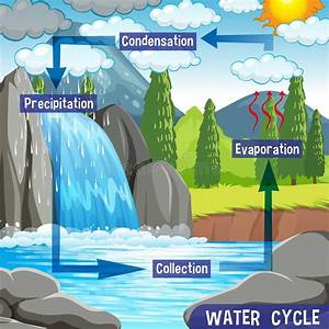 Water Cycle Stock Illustrations  U2013 5 121 Water Cycle Stock