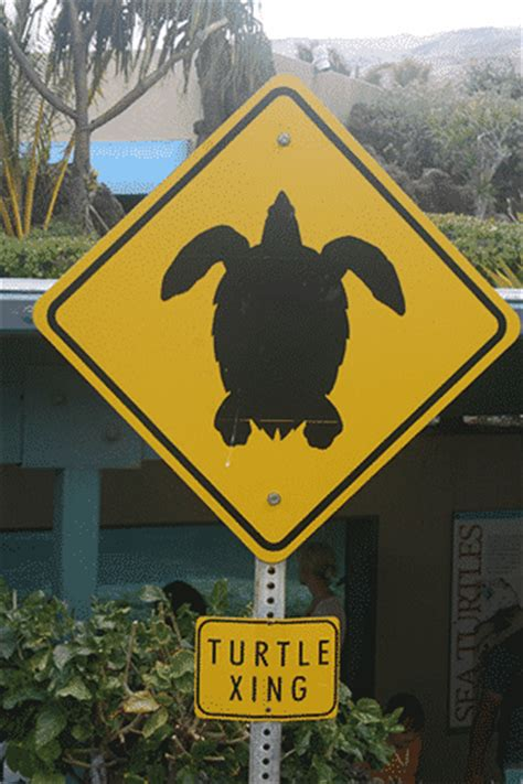 Interesting Signs In Hawaii  Go Visit Hawaii. Anti Signs. Printed Signs Of Stroke. Wellness Signs Of Stroke. Kitchen Safety Signs Of Stroke. Hazard Signs. Jpeg Signs. Bone Cancer Signs. Metro Mumbai Signs