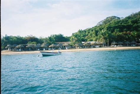 Fishing Boats In Zihuatanejo by Fishing Boats In Zihuatanejo Picture Of Ixtapa