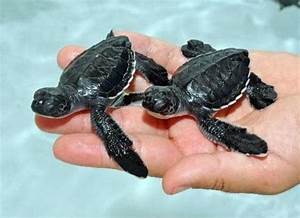 82 Tiny Baby Sea Turtles Make Lots of Little Waves - ZooBorns