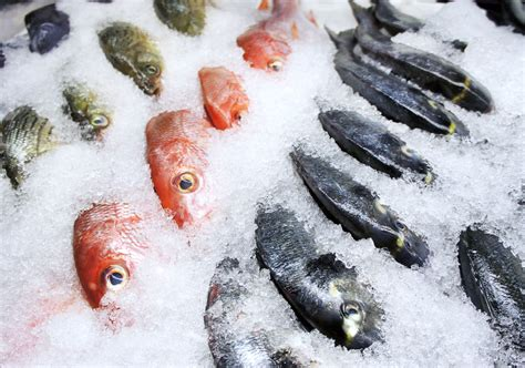 how to store fish how to freeze fish tips and methods