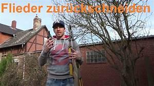 Flieder Schneiden Video : flieder schneiden flieder richtig zur ckschneiden wann flieder schneiden youtube ~ Orissabook.com Haus und Dekorationen