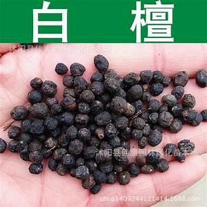 Online Buy Wholesale sandalwood tree from China sandalwood ...