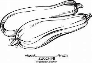 Zucchini free vector download (5 Free vector) for ...