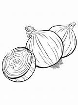 Onion Coloring Colouring Vegetables Template Must Printable Popular Picolour Raskraska Colors Recommended sketch template