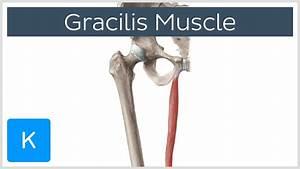 Gracilis Pictures to Pin on Pinterest - ThePinsta