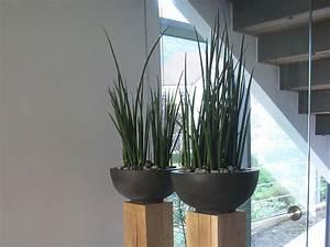 Pflanzen Für Wohnzimmer : nutzen sie pflanzen als raumteiler b robegr nung pinterest raumteiler wohnzimmer ~ Markanthonyermac.com Haus und Dekorationen