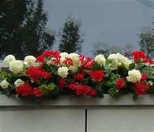 Künstliche Balkonpflanzen Wetterfest : balkonpflanzen k nstlich ~ Eleganceandgraceweddings.com Haus und Dekorationen