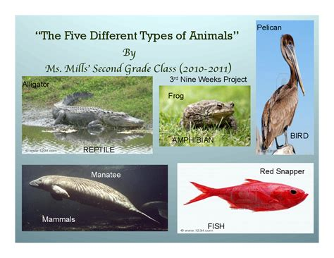 The Five Different Types Of Animals By Ms. Mills' Second