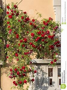 Rosen Für Balkon : mailand balkon mit roten rosen stockfoto bild 40759140 ~ Michelbontemps.com Haus und Dekorationen