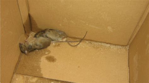 Restaurant Fined After Dead Mice Found  Meridian  Itv News