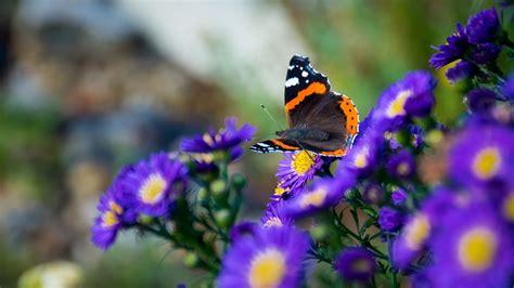 Download Wallpaper 3840x2160 Butterfly Flowers Wings