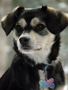 Husky Beagle Mix   Animals!!   Pinterest