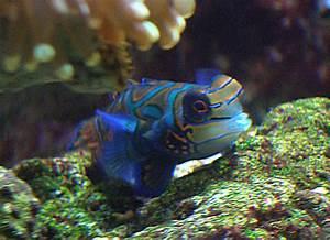 Das Aquarium Blubber Fischde