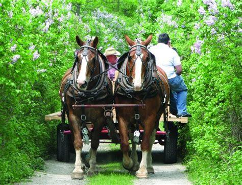 franktown lilac festival lanark county tourism