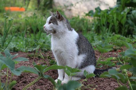 Katzen Vertreiben So Halten Sie Sie Aus Dem Garten Fern