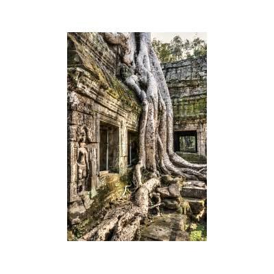 Ta Prohm – the jungle temple in CambodiaPhotoCory