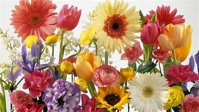 Spring Desktop Wallpapers Backgrounds Flowers Flower Background
