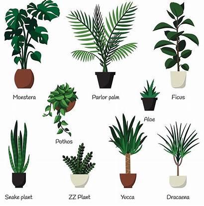 Indoor Plant Fertilizer Liquid Common Purpose Fertilizers
