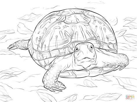 Realistic Ornate Box Turtle Coloring Page Free Printable
