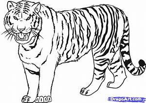 How to Draw a Tiger, Step by Step, Rainforest animals ...