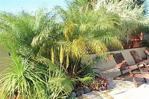 Palmier De Jardin : palmiers du jardin des lataniers ~ Nature-et-papiers.com Idées de Décoration