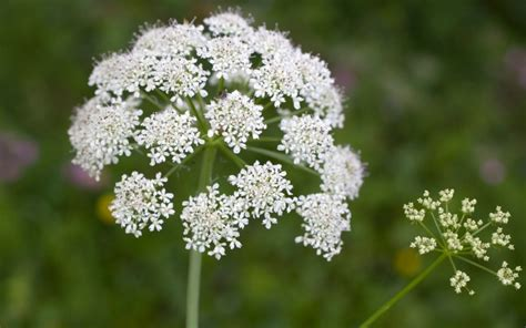 poisonous plants to look out for in your garden telegraph
