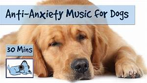 anti anxiety music for dogs separation anxiety music With anti anxiety dog music