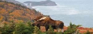 Haus Kaufen Kanada British Columbia : kanada immobilien h user grundst cke immo kanada faire ~ A.2002-acura-tl-radio.info Haus und Dekorationen