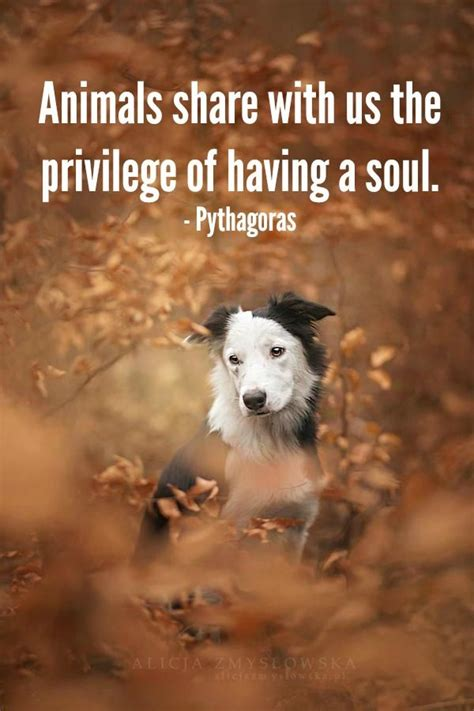 Animal Wallpapers With Quotes - all animal that animals a soul www