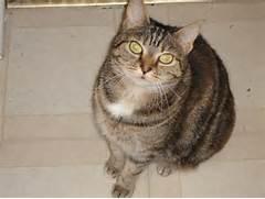Athena The Torbie Cat  torbie thursday  Torbie Cat