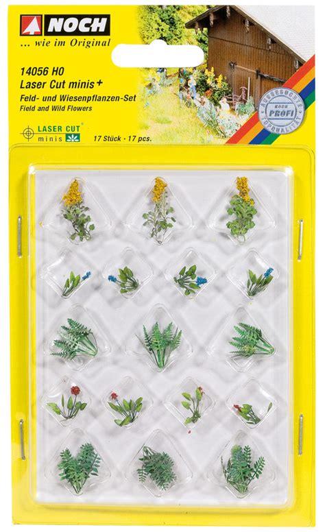 Pflanzen Für Miniaturgarten by Miniatur Feld Und Wiesenpflanzen Noch Kreativ