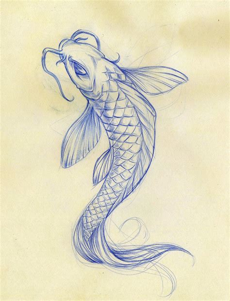 koi fish drawings koi fish sketch  daeo traditional