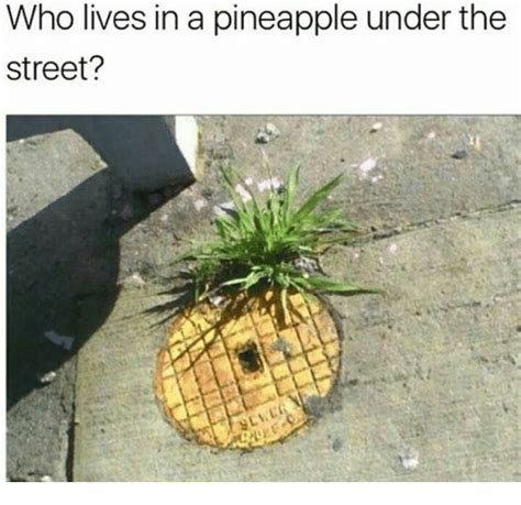 Pineapple Memes - who lives in a pineapple under the street pineapple meme on me me