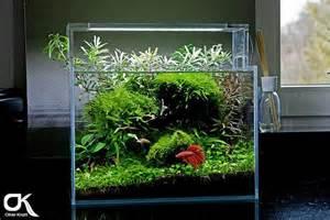Betta Fish Tank Plants