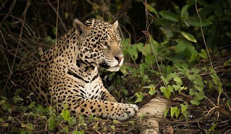 dangerous animals   amazon rainforest