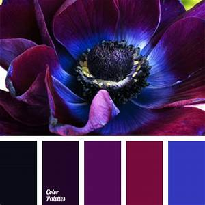 violet-dark blue color | Color Palette Ideas
