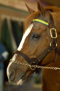 marquetry relocated   friends bloodhorse