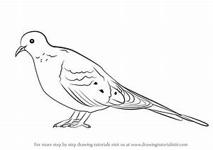 Learn How to Draw a Mourning Dove (Birds) Step by Step ...