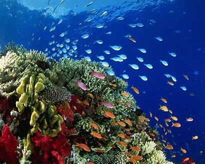 Under Sea Wallpapers Ocean Compare Prices Shopping